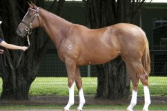 Last Easter Yearling Sales at Newmarket