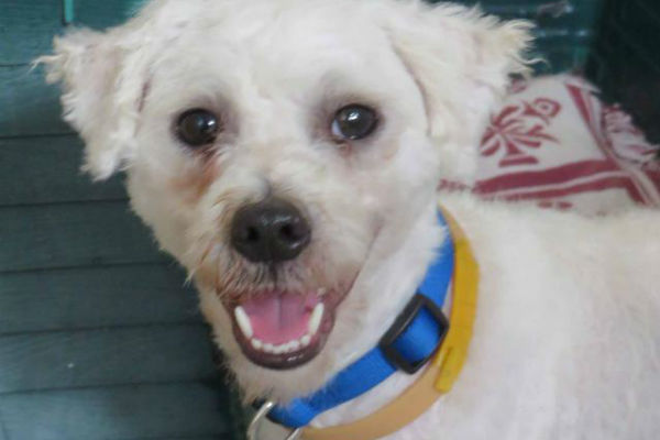 Article image for Pet of the week: Snoopy