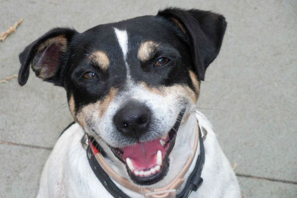 Article image for Pet of the week: Billy