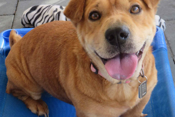 Article image for Pet of the week: Stella