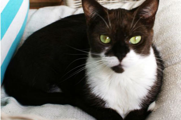 Article image for Pet of the week: Levi