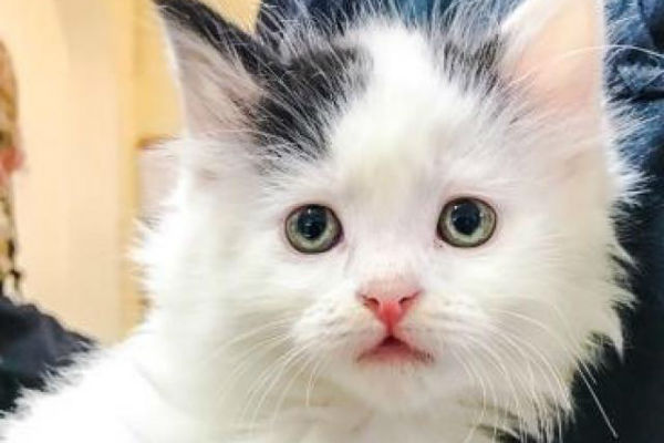 Article image for Pet of the week: Crackle