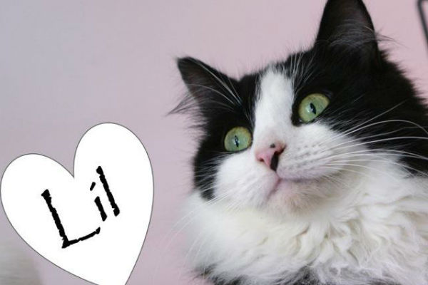 Article image for Pet of the week: Lil