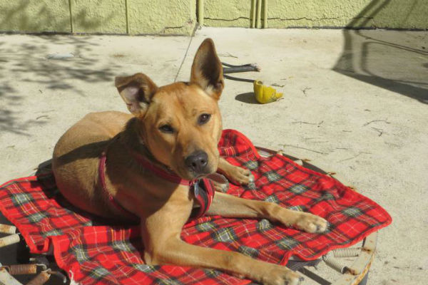 Article image for Pet of the week: Zoe