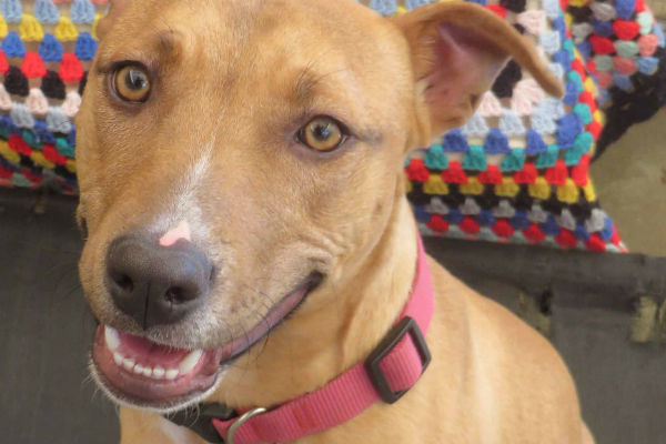 Article image for Pet of the week: Paige