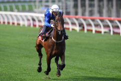 Winx Attempts 3rd Straight Cox Plate Victory