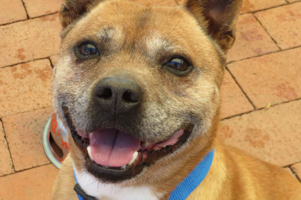 Article image for Pet of the week: Marcus