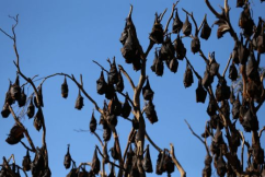 The Bats Are Back