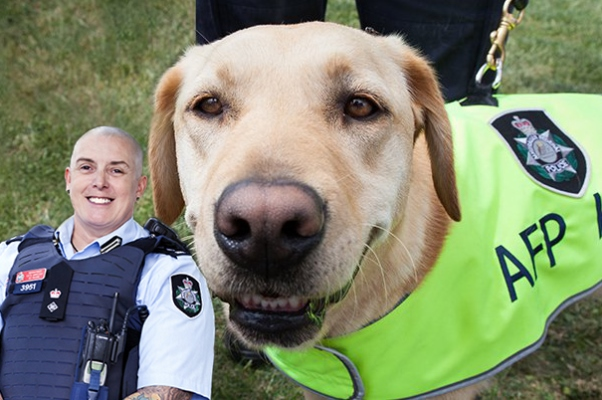 Article image for Meet the four-legged friends protecting our borders