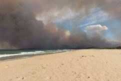 Update on the Tathra bushfire recovery efforts