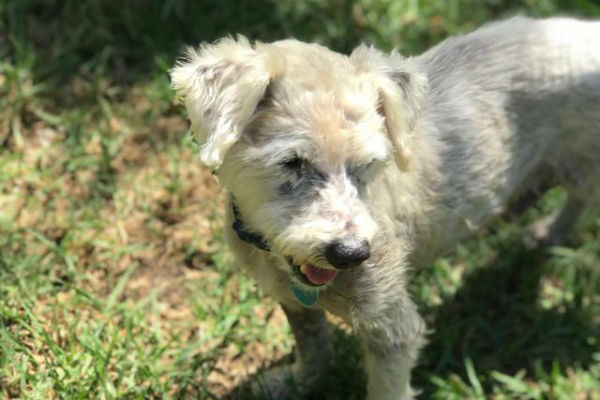 Article image for Pet of the week: Jenkins
