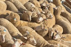 Government not banning live exports anytime soon