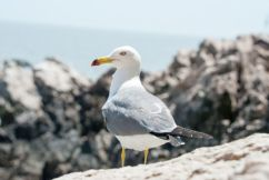 This restaurant is finally scaring off the pesky seagull and their method is genius