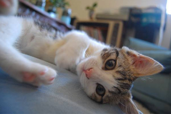 Article image for Charity pushes to get kittens desexed as breeding season looms