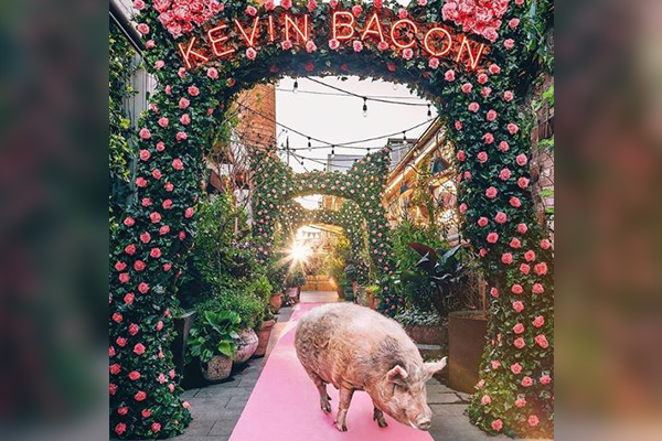 Article image for Don't go bacon my heart: Iconic pet hangs up his hooves