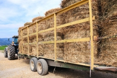 Hay shortage puts squeeze on already struggling farmers