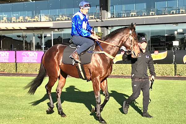 Article image for Champion mare Winx in top form ahead of milestone race