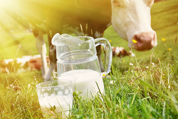Article image for Coles and Aldi raise their milk price in support of dairy farmers