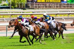 Mass slaughter of racehorses