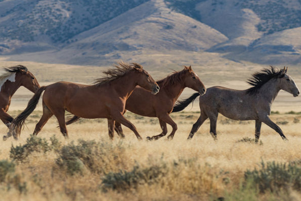 Article image for Community given 'no consultation' on aerial brumby culling