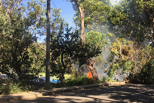 Article image for Balmoral fire: Fallen tree pulls down power lines, sparks electrical fire