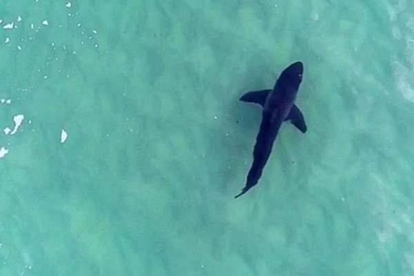 Article image for Love the surf? This app tracks sharks with incredible drone footage