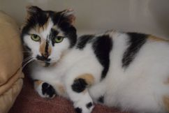 Pet of the week: Snow White