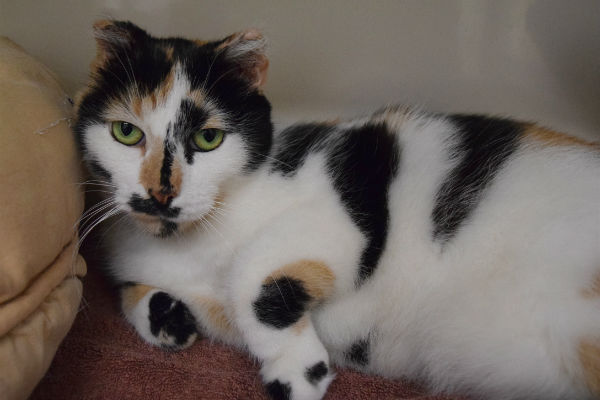 Article image for Pet of the week: Snow White