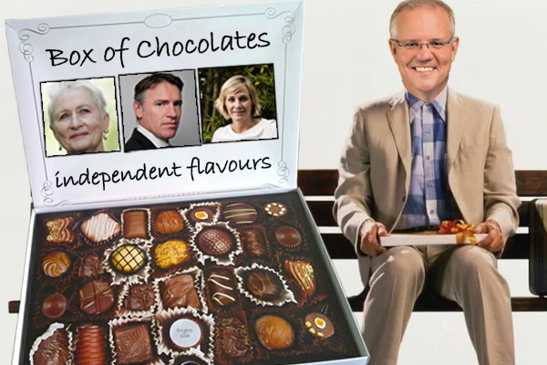 Article image for Scott Morrison says Independents are 'like Forest Gump's box of chocolates'