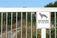 Woman dies after being mauled by her own dog