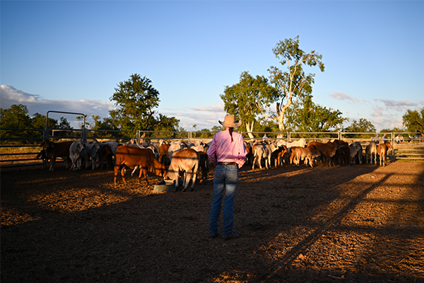 Article image for 'Like taking oxygen out of someone's lungs': Our farmers under siege