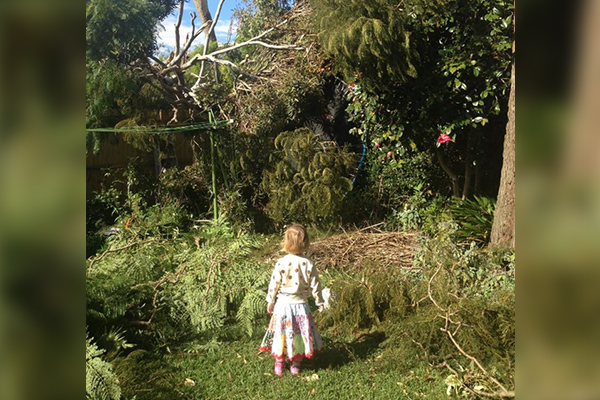 Article image for Mayor visits home after council refuses to remove dangerous tree