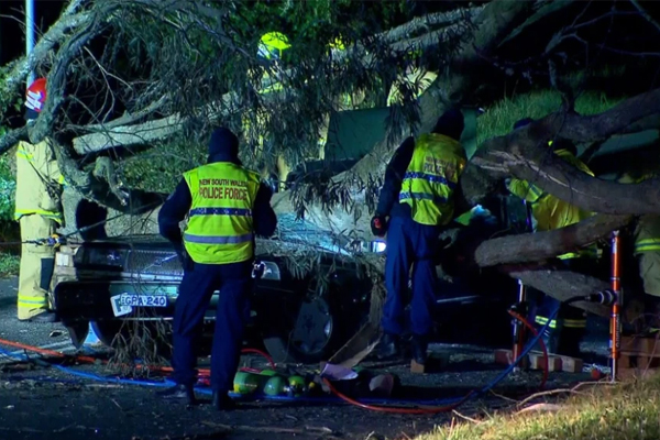 Article image for 'A very sad day': Paramedic killed after car crushed by falling tree, Katoomba