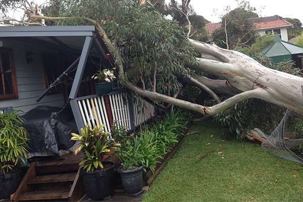 Article image for 'Healthy' tree falls on Sydney home