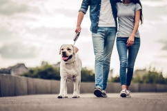 Dog owners facing huge fines for failing to walk their pets