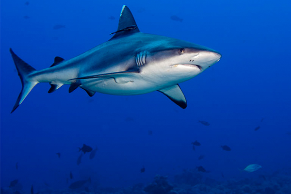 Article image for 'Politics ahead of safety': Environment minister slams removal of shark drumlines