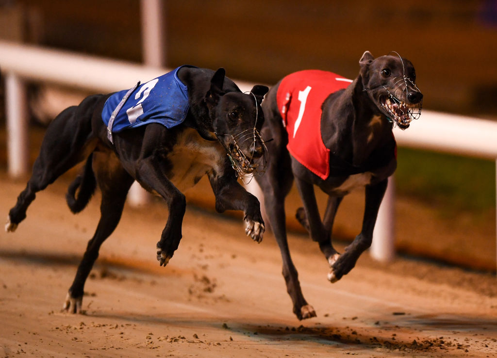 Article image for Greyhound NSW fighting to keep Dapto Dogs track open