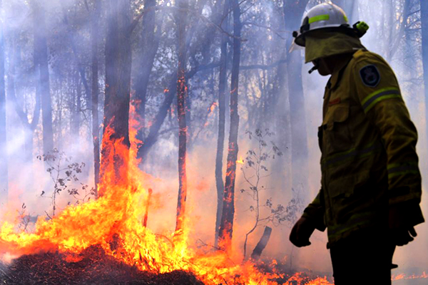 Article image for Minister 'confident' in resources to fight unprecedented bushfires