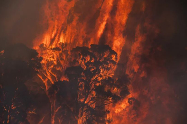 Article image for 'It's like hell': Eight dangerous fires burn across NSW on New Year's Eve