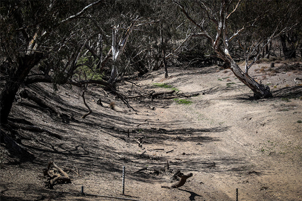 Article image for Billions of litres of water flowing out to sea as NSW suffers through drought