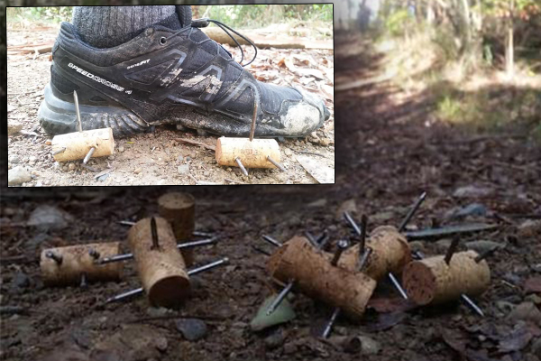 Article image for Gruesome booby traps found hidden on NSW running trail