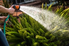 Thousands of Sydneysiders dobbed in during water restrictions