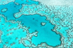 Environment Minister says Great Barrier Reef saved from 'kick in the teeth'