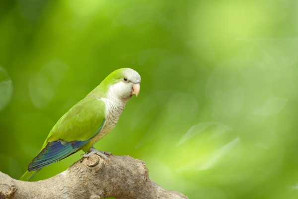 Article image for NSW Minister turns to a talking parrot in these tough times