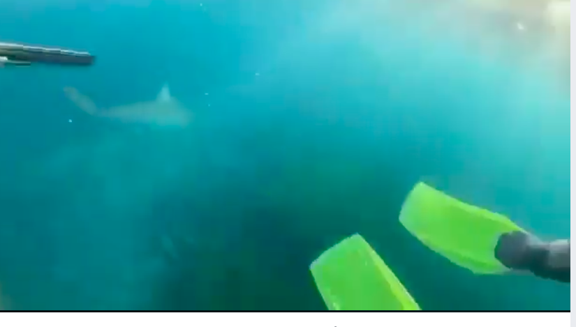 Article image for Teen films incredible close encounter with shark near Wollongong