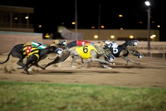 NSW greyhound industry gets animal welfare overhaul