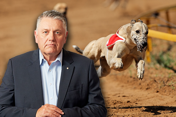 Article image for Ray Hadley reveals latest 'bizarre' plan to shut down greyhound racing
