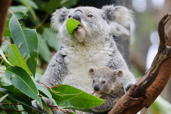 Article image for 'It's baby season': Reptile park welcomes the cutest attraction in NSW