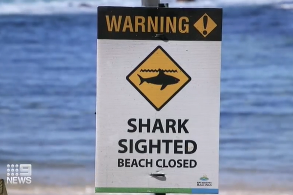 Article image for How to save someone from a shark attack