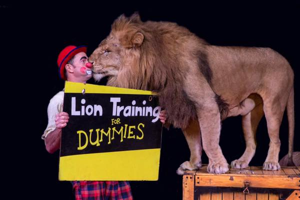 Article image for Circus owners defend themselves against 'extremist animal groups'